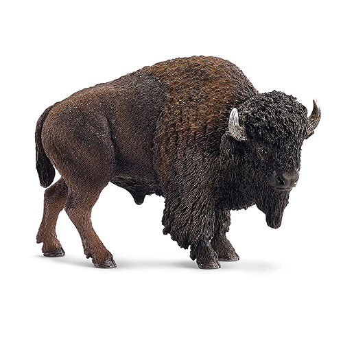Bison vs. Beef. What's The Difference?