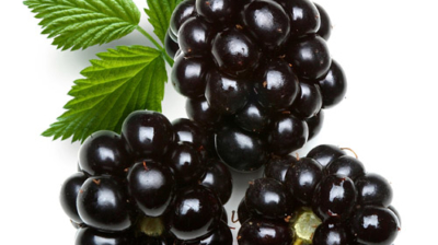 Everything You Need To Know About Blackberries
