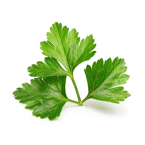 Everything You Need To Know About Cilantro