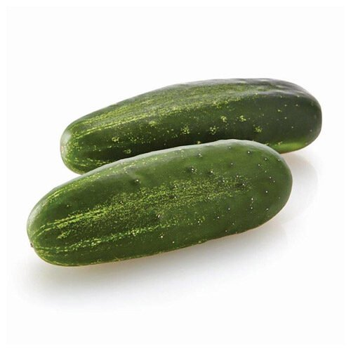Everything You Need To Know About Cucumbers
