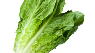 Everything You Need To Know About Lettuce