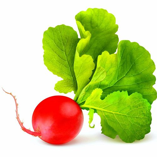 Everything You Need To Know About Radish